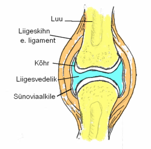 Valus silindri luude liigend