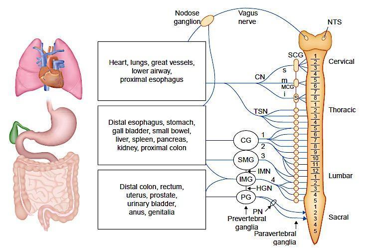 Glukosamiin Chondroitiin Complex N90 Arvustused