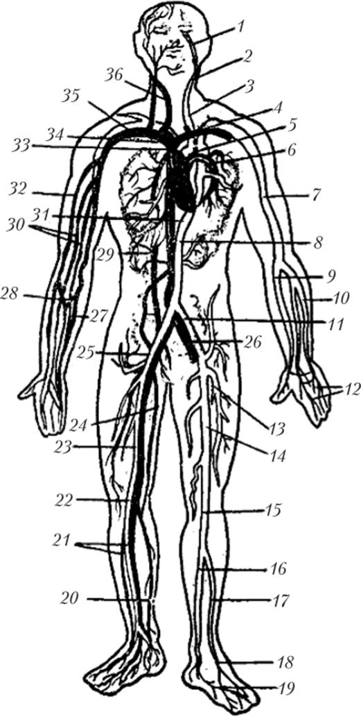 Artroos 1 ja 2 kraadi olaliigese kraadi
