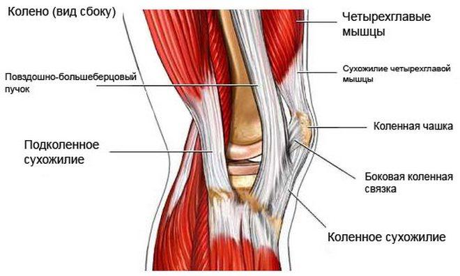 Polved valutab ligamente Haiguse loualuu liigeste