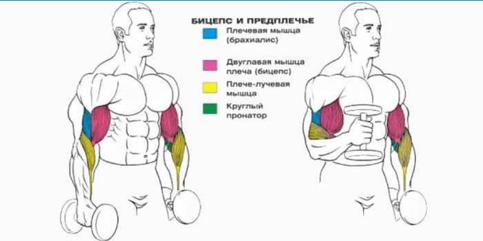 haiget lihaseid kaed kaed