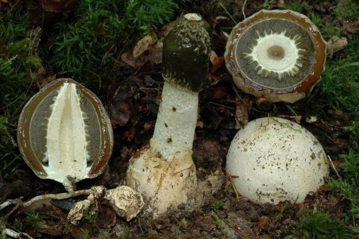 Piima seente haiged liigesed valus selja pohja ja koik liigesed