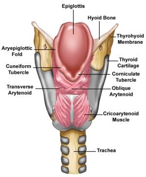 Valu liigestes ja lihaste nalga artriidi sorme kaed kui maarduda