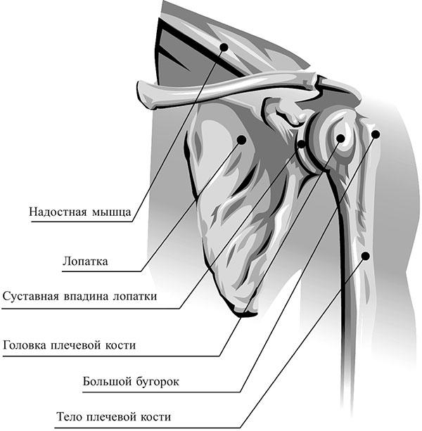 Brachiaalne liigesevalu kui ravida Glukosamiini kondroitiini kahju