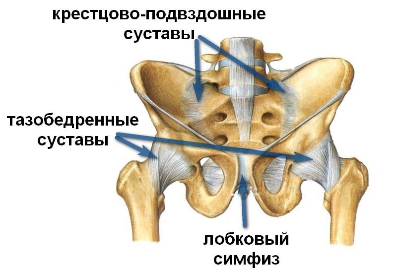 Artrisa ravi Heviz jarvel Dusplaasia liigeste ennetamine