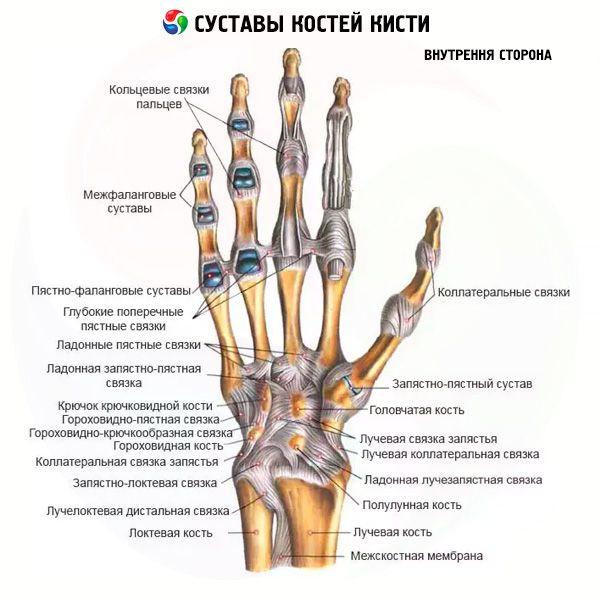 Puha Peakate Sormede artriit salvide kaes