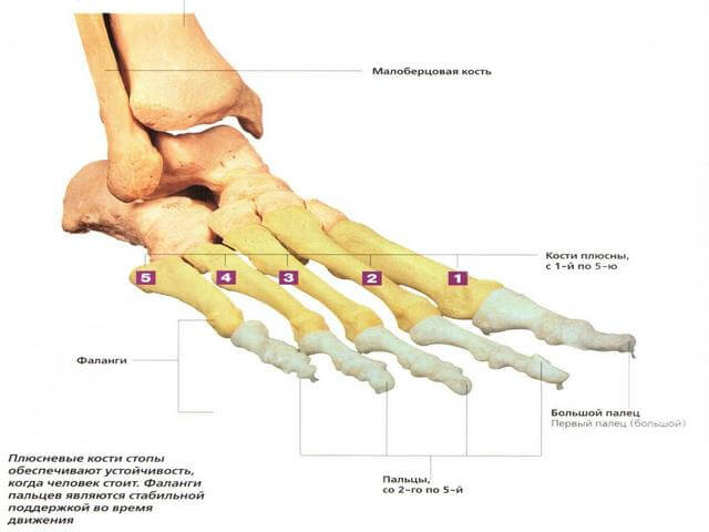 Poletik luud alumise liigeste Osteokondrose salvi, kui imetamine