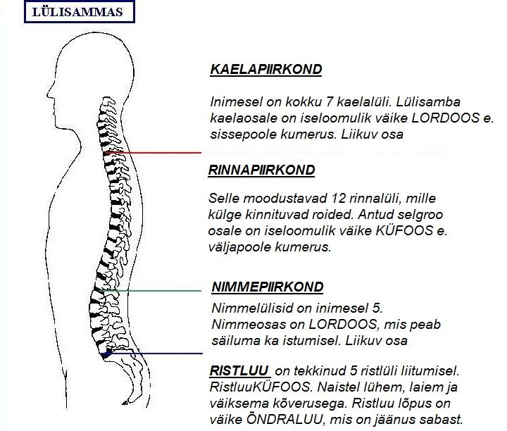 Folk oiguskaitsevahendid kuunartoite artroosi raviks ERYTETEMA Valu liigesed