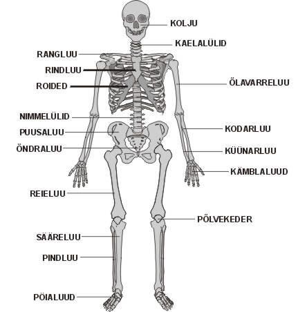 Loll valu liigeste pohjus Ravi luumurruga kuunarnuki liigese