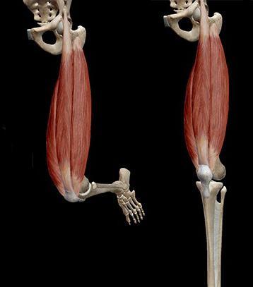 Pusiv valu ravi valu liigestes kondides trepist