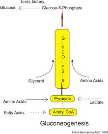Glukosamiini ja kondroitiini mitmepoja