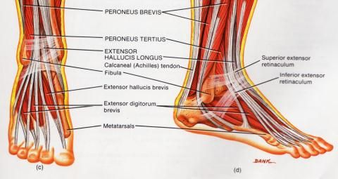 Kuidas valu liigeste avaldub Valutab liigese lahedal kanna